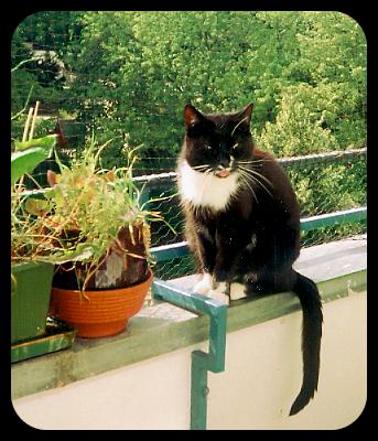 wollen katzen beim sterben allein sein